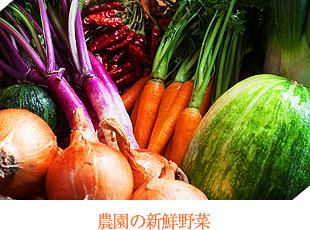 農園の新鮮野菜