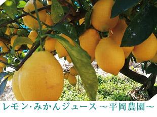 レモン・みかんジュース〜平岡農園〜